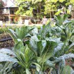 Kokkoya Organics 5.jpg